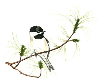 Black Capped Chickadee Watercolor Print