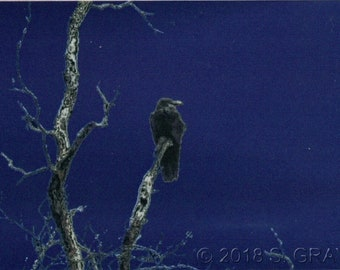 ACEO SFA Corvid 2 digital art altered photograph crow raven tree branch print nitelvr