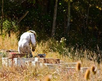 Photograph Beekeeper