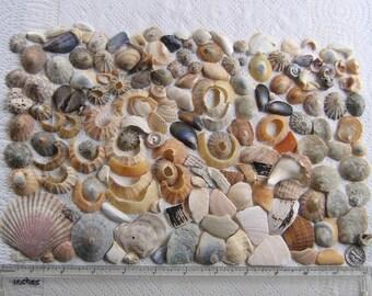 166 Natural Sea Shells Shell Fragments Art Mosaic Craft Supplies (1729)