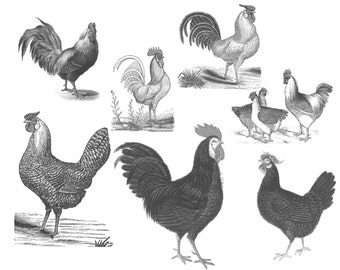 12 Vintage chicken.abr brushes with corresponding .png files