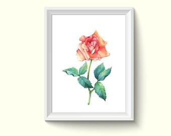 Rose Flower Watercolor Painting Poster Art Print P462