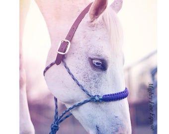 Breakaway Rope Halter • Mighty Fine Equine Original Design