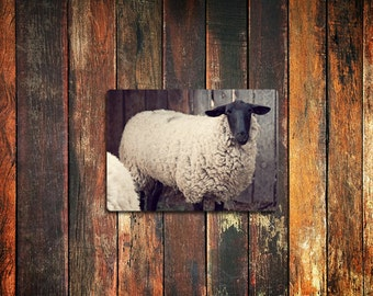 sheep farm animal photo magnet / kitchen decor, fine art photograph, rustic, farm, sheep, lamb, woolly