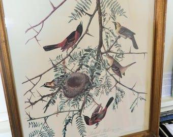"1946, Audubon Bird Print, ""Orchard Oriole"", Framed, 20 1/4"" x 17"""