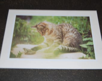 Tortie Feline Playing with Frog Photo Print 5x7 Notecard and Envelope