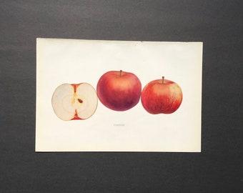 1905 ANTIQUE APPLE PRINT original antique fruit lithograph print -  fameuse apple
