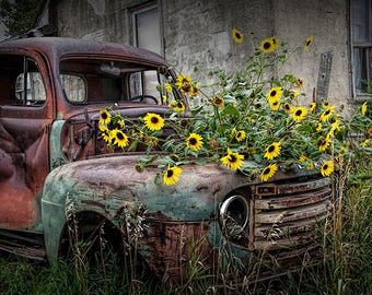 "Vintage Ford, Truck Photograph, Daisy Flowers, abandoned car, Ghost Town, South Dakota, Auto Landscape, Fine Art, Photography ""Ford Truck"""