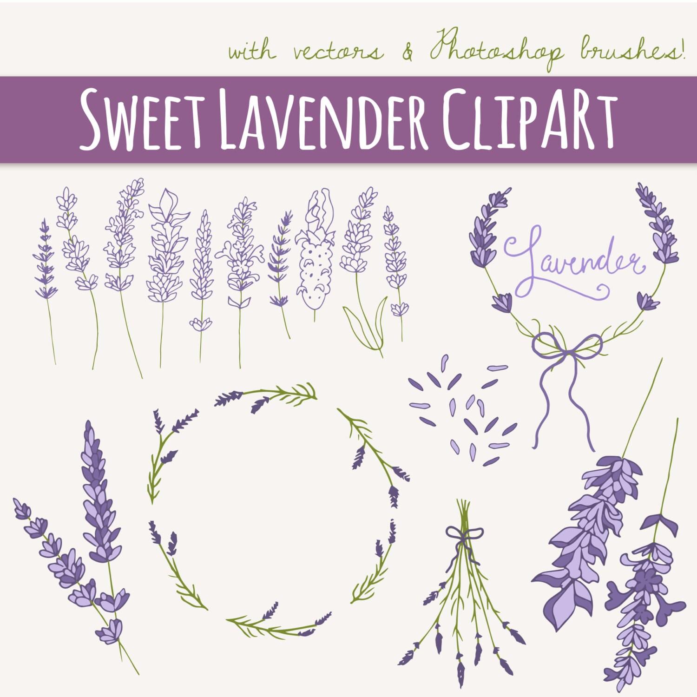clip art lavender sprigs photoshop brushes digital rh etsy com Lavender Sprig Swag Clip Art Lavender Sprig Drawing Clip Art
