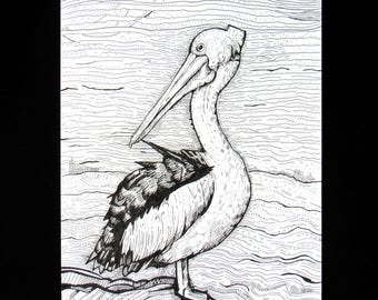Pelican Pen and Ink Drawing