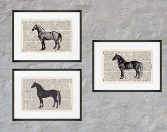 Prints set of 3 - horses - Antiquarian Book page