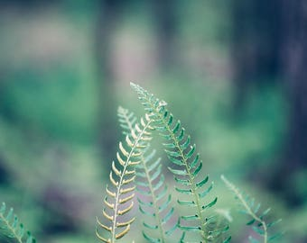 Forest photography, fern photography, woodland art, forest print, forest art, nature wall art, nature photography, large wall art, green,