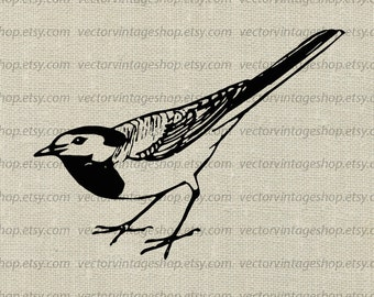 Bird Vector Clipart, Commercial Use, Wagtail Graphic Clip Art, Old Illustration, Instant Download