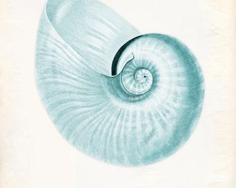 Vintage Sea Shell Print 8x10 P227