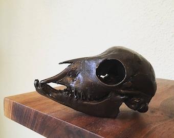 Bronze Cast Kid Goat Skull