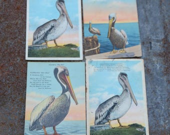 Souvenir Florida Postcards, Vintage Pelican Postcards, Set of 4 Pelican Cards, Great for Beach Decorations and Cottage Style Decor