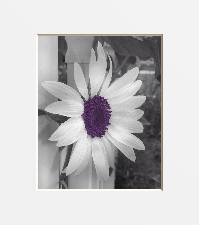 Black White Purple Wall Art Purple Sunflower Modern Decor