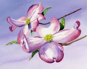 Dogwood Blossoms Watercolor Print