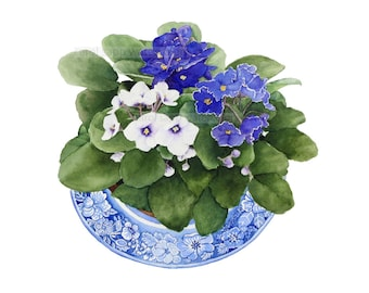 African violets watercolor-violet painting-purple violets-flower watercolor-flowers painting-blue and white-botanical painting-botanical art