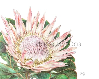 Protea - The Natural Living Collection Print No. 1