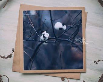 Floral Photo Card - Snowberry - Symphoricarpos
