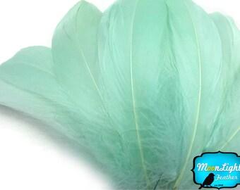 Goose Feathers, 1/4 lb - MINT Goose Nagoire Wholesale Feathers (bulk) : 3757