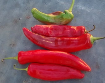 Anaheim Chili Pepper Heirloom Garden Seed Non Gmo Open Pollinated Popular Hot Pepper Tasty 30+ Seeds Used in Salsas Gardening