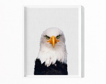 Eagle Print, Hawk Photography, Animal Wall Art, Bird of Prey, Printable Art, Instant Download, Modern Minimal, Bird Photo, Bald Eagle, #571