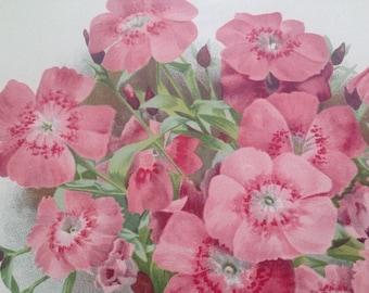 1900 Beautiful Large Original Antique Botanical Matted Lithograph - Dianthus Callinzonus - Gardening - Botany - Horticulture - Wall Decor