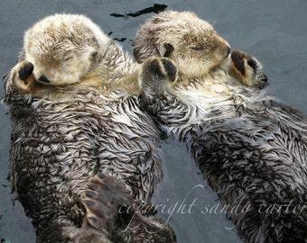 Otter Love Fine Art Photograph