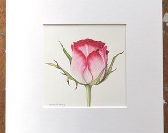Watercolour rose - Original painting