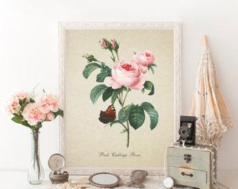 Vintage Botanical Print, Roses Print, Flower Botanical Print, Pink Cabbage Roses, Natural History Art, Roses Art Print Reproduction Fl054
