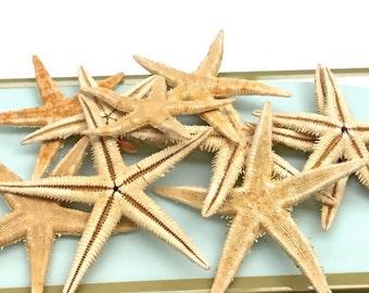 "Starfish - Flat Natural Starfish - Set of 10 - 2""-3"" Beach Decor star fish coastal beach wedding"
