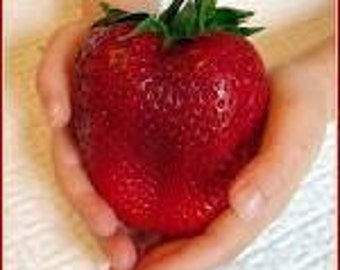Giant Strawberry Seeds Rare Big as a Peach Fragaria ananassa L. Maximus, 25 Seeds
