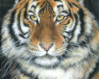 SONGHA Tiger by Carla Kurt signed print