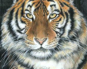 SONGHA Tiger by Carla Kurt signed print