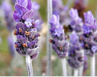 Lavender Stimulating Hair Milk Conditioner