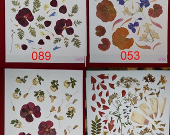 Real pressed leaves and flowers #089 #053 #090 #963