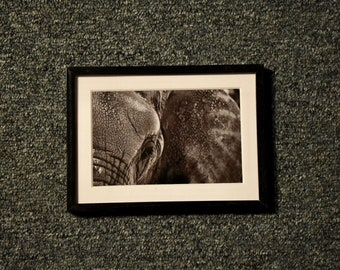 Elephant Profile - 4x6 Photograph in 5x7 Frame