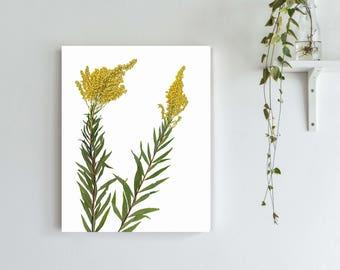Goldenrod Art Print - Pressed Flowers Botanical Print - Herbarium Art - Yellow Flower Print - Dorm Room Decor - State Flower Print Wall Art