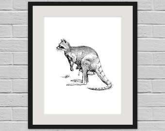Kangaracoon - Weird Wildlife Wall Art Poster and Canvas Print