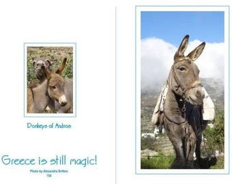 Card with photographs of Donkeys