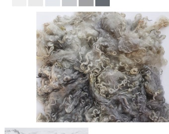 English Cotswold big chunky fleecy Locks direct from the Cotswold (Royal Wool) - ewe fleece.