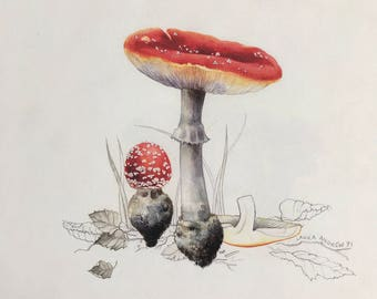 Original Watercolour painting By Laura Andrew - Fly Agaric Toadstool ART