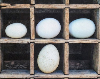 Egg Photograph, Kitchen Wall Art, Rustic Farmhouse Decor, Food Photography, Country Wall Decor | 'Hard Boiled'