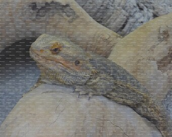 Poster Print using Image of an Original Reptile