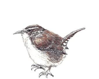 Bird Art - Bird Drawing -  Bird Decor - Little Wren Drawing - Bird Wall Decor