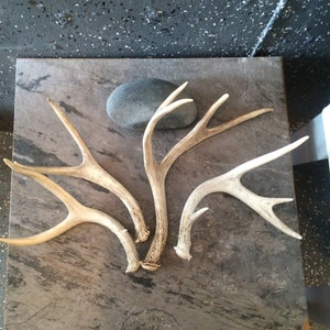 craft antlers Small
