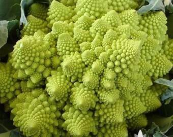 Romanesco Broccoli Heirloom Seeds - Non-GMO, Open Pollinated, Untreated