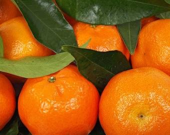 Mandarin Fragrance Oil - 4 ounces